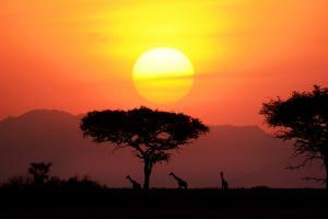 Танзания – страна сафари