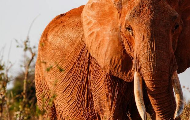 Кения – страна красных слонов и розовых фламинго