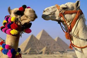 Какие подводные камни ждут туриста в Египте